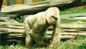 1475430063_516_los-7-animales-albinos-mas-famosos