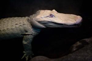 1475430063_905_los-7-animales-albinos-mas-famosos