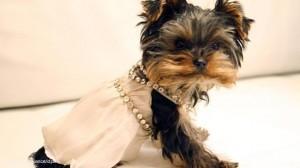 Bodas y moda para perros