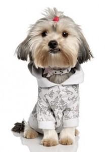 1475440531_907_bodas-y-moda-para-perros