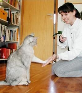 adiestra-a-tu-gato