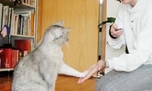 7 consejos para adiestrar a tu gato