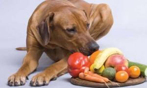 Consideraciones sobre los alimentos de origen vegetal para perro