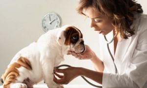 La higiene general de tu perro