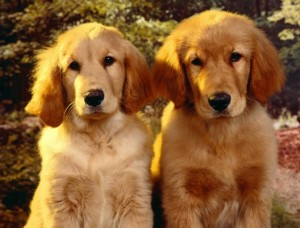 perro o perra pet central