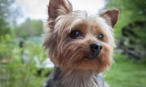 Pequeños perros que se convertirán en tus grandes amigos