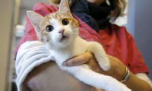 5 Tips de cómo encontrar un buen médico veterinario para tu Animal