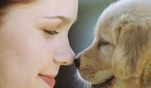 Las mascotas también quieren alegrías