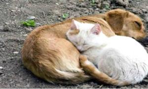 AYUDANDO A LOS ANIMALES SIN HOGAR