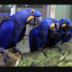 Curiosidades que no conocías de las aves