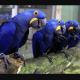 Curiosidades-que-no-conocías-de-las-ave