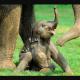 Descubriendo el mundo de los elefantes ! Lleno de sensibilidad