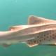 Los tiburones más fascinantes pero que a toda mujer le daría temor encontrar