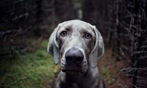 Cómo conseguir que tu perro te preste atención