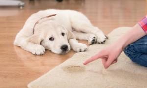 Cómo conseguir que tu perro se eche