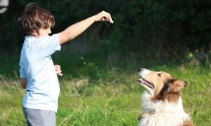 Cómo conseguir que tu perro se quede quieto