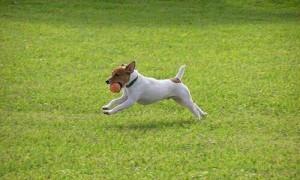 Los Caninos con más energía del Mundo