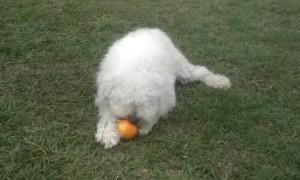 ¿Pueden los perros comer naranjas, mandarinas, limas?