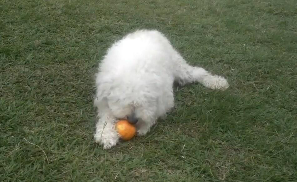 perros y naranjas