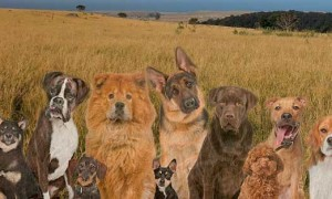 El increíble número de razas de perros. Realmente deberías saber