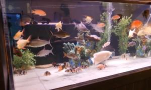 Como elegir peces para tu acuario