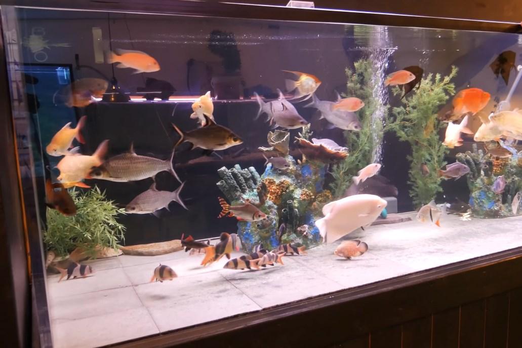 como hacer un acuario