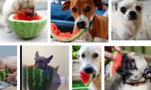 ¿Pueden los perros comer sandía?