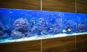 Formas de mantener un acuario totalmente limpio para los visitantes