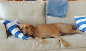 Formas de hacer ejercicios con mi perro dentro del hogar
