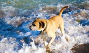 Beneficios que brinda el agua de mar a los cachorros de cualquier edad