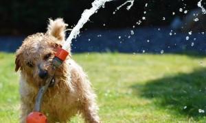 ¿Con qué frecuencia debes bañar a tu perro?