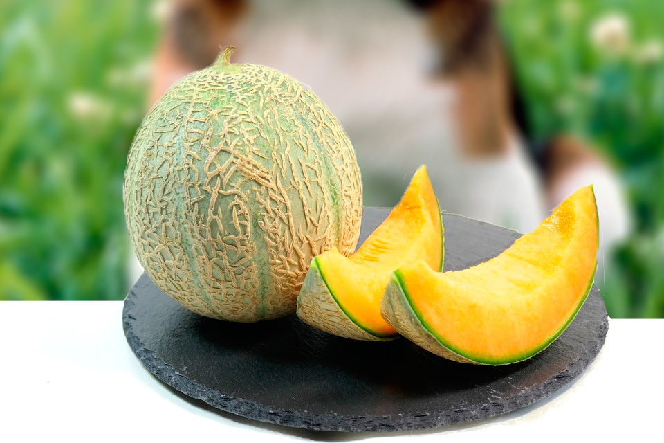 mi-perro-puede-comer-melon