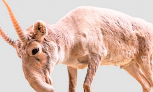 Animales en peligro de extinción que no sabías que existían.