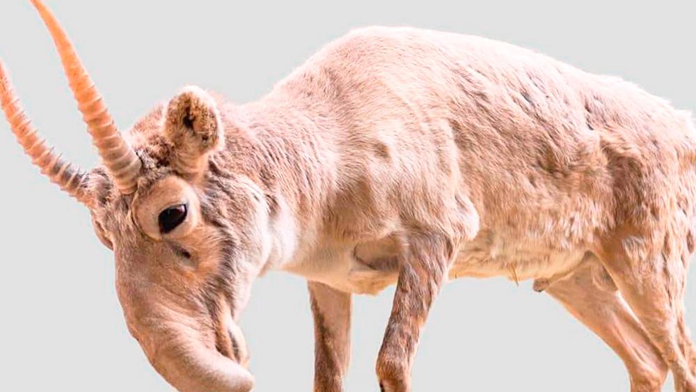 animales-en-pelgro-de-extincion-petcentral