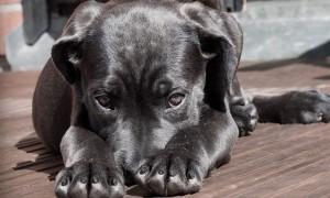Cómo saber cuándo su perro necesita una cita en el veterinario