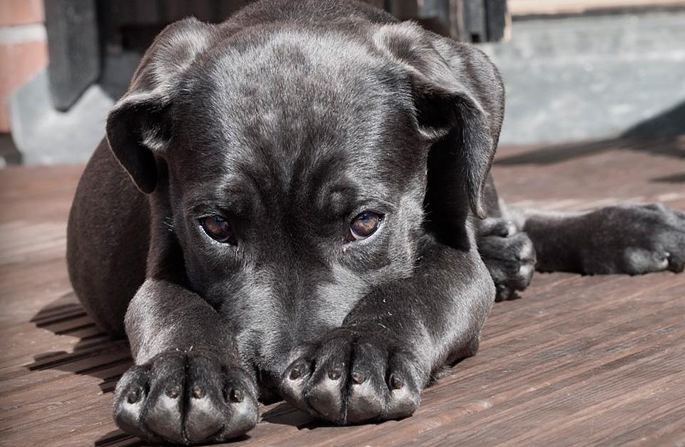 como-saber-si-mi-perro-esta-enfermo