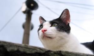¿Los gatos pueden comer comida para perros?