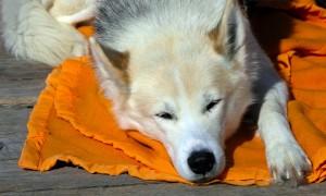 ¿Por qué los perros se enferman del estómago?