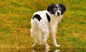 ¿Qué debo saber si me perro pierde pelo?