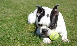Señales que su perro podría necesitar más ejercicio