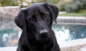 ¿Por qué a los perros les gusta frotarse el vientre?