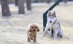 ¿Cómo elegir el perro?