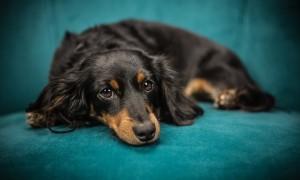 ¿Cómo mantener limpia y saludable la piel de nuestro perro?