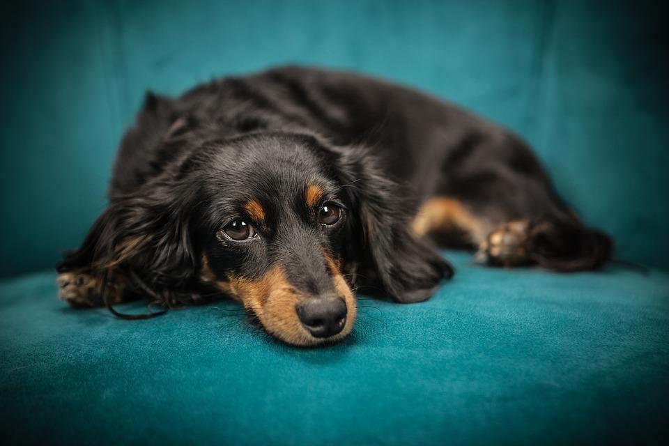 ¿Cómo mantener limpio y saludable a nuestro perro