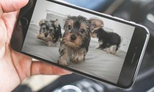 Ventajas de las cámaras de vigilancia para mascotas
