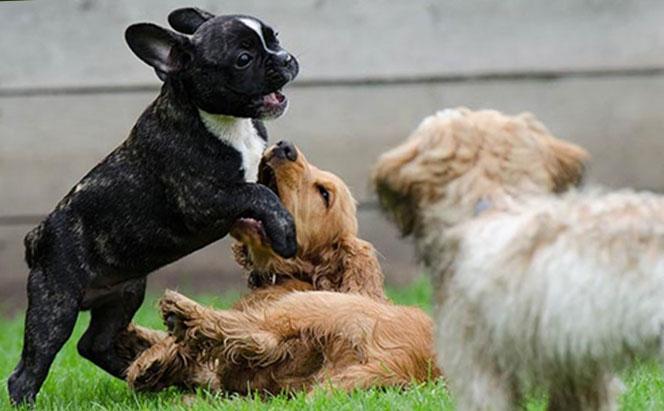 Ayudando a tu cachorro a socializar