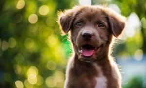 Enseñando a tu cachorro: conceptos básicos de entrenamiento y obediencia