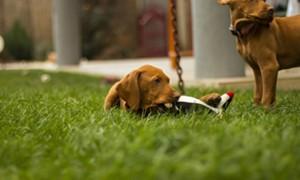 Enseñando a tu cachorro por medio del juego