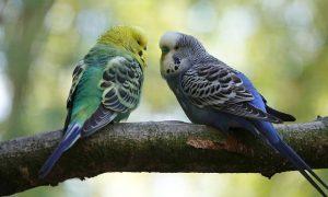 Parásitos en pájaros; Internos y Externos