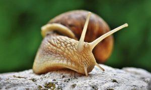 Reproducción de los moluscos